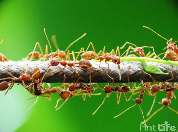 Формикарий: что это, виды, особенности ухода за муравьиной фермой